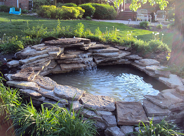 Keeping Frogs Out of the Pool: What you Have to do - Get ...